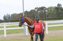 timaru-races-0013