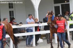timaru-races-0021