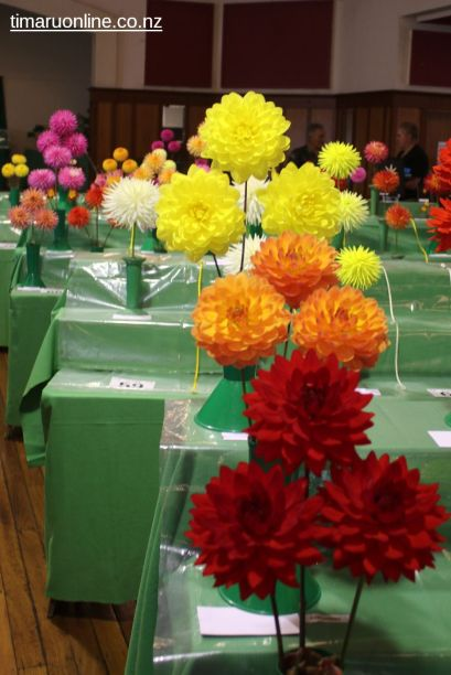 horticultural-society-show-0006