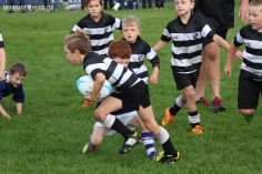 Junior Rugby Kicks Off 00230