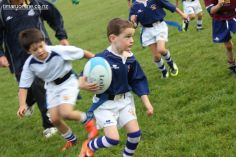 Junior Rugby Kicks Off 00337