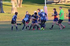 Scone Junior Rugby 0087
