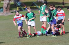 Under 13 Town v Country 0036