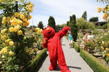 Rose Festival 0055